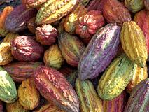 Tornano le settimane Fairtrade